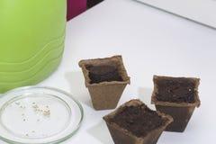 生长幼木在家 在桌上是泥煤罐充满地球和充满水 附近有种子的一个茶碟 免版税库存照片