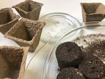 生长幼木的辅助部件在家 在泥煤上板材谎言片剂,充满水变柔和 附近有泥煤罐 图库摄影