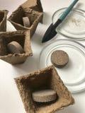 生长幼木的辅助部件在家 有地球的泥煤罐以里面片剂的形式 附近有种子的a一个茶碟 免版税库存照片