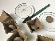 生长幼木的辅助部件在家 有地球的泥煤罐以里面片剂的形式 附近有种子的a一个茶碟 免版税库存图片