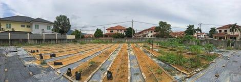生长或维护我们自己的有机庭院用草本、蔬菜&水果在房子化合物 库存照片