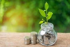 生长挽救瓶子的新芽植物以充分硬币和堆  免版税库存图片