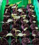 生长新的植物 免版税库存照片