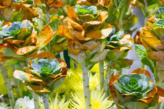 生长新自然橙色和绿色微型圆白菜农田庭院  免版税库存照片