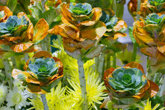 生长新自然橙色和绿色微型圆白菜农田庭院  免版税库存图片