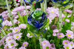 生长新自然蓝色和绿色微型圆白菜农田庭院  库存图片