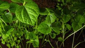 生长是植物时间间隔 股票录像