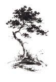 生长杉树的墨水例证 Sumi-e窗框 免版税库存图片