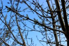 生长树在春天 免版税图库摄影