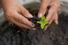 生长树 概念行星保存 库存照片