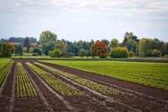 生长植物领域 免版税库存照片