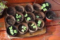 生长植物 库存照片