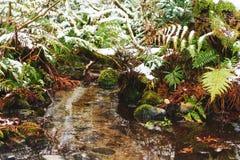 生长沿冬时的The Creek的蕨 库存图片