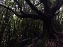 生长沿Hanakapiai在NaPali海岸的秋天足迹的竹子沿Kalalau足迹在考艾岛海岛,夏威夷上的多雨和有薄雾的天 库存照片