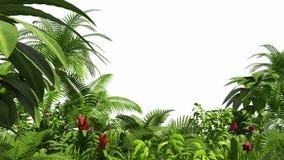 生长热带森林,阿尔法通道 皇族释放例证
