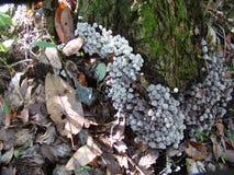 生长由一棵老树的蘑菇 库存照片