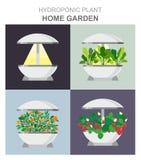 生长的不同的植物,草莓,莴苣,没有土壤,家庭菜园设施的桔子水耕的系统 库存例证