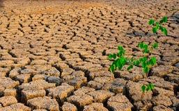 生长的树被折磨的和旱田在干旱的区域 免版税库存图片