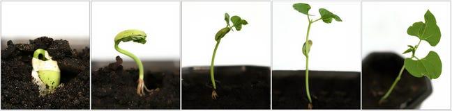 生长种子 免版税库存照片