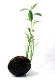 生长种子 库存照片