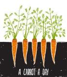 生长红萝卜磨擦的图画和字法 免版税库存照片