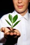 生长结构树 库存照片