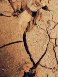 生长绿色植物的干燥地球 库存照片