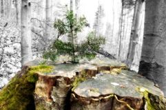 生长老树桩结构树年轻人 免版税库存照片