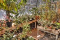 生长自一间温室的植物在冬天 免版税库存图片