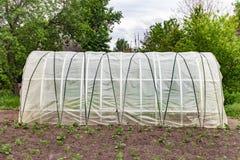 生长菜的温室在庭院里 图库摄影
