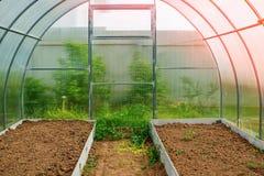 生长菜自一间温室在国家 种植的菜高庭院 定调子 图库摄影