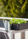 生长萝卜和沙拉在容器在阳台 菜加尔省 免版税库存图片