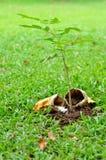 生长营养结构树 库存照片