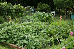 生长蔬菜 免版税库存图片