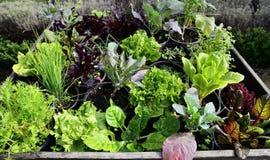生长蔬菜 免版税库存照片