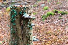生长蘑菇树干 免版税库存照片