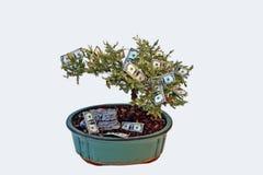 生长货币结构树 免版税库存照片