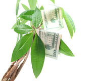 生长货币结构树 图库摄影