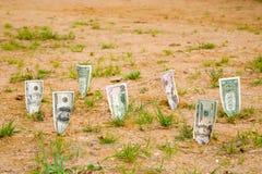 生长货币 库存图片