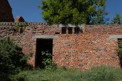生长通过一个未完成的被放弃的红砖大厦的绿色树 免版税图库摄影