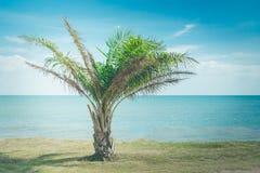 生长通过岸的偏僻的矮小的绿色棕榈树有海景视图在背景中 图库摄影