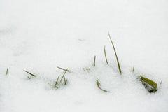 生长通过雪的新鲜的绿草 袋子是开始了期初chukotka来日下来欺骗朋友有感兴趣放置晴朗我的休眠休眠打鼾的打鼾春天的星期日非常那里移动谁 库存图片