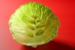 生长里面叶子的圆白菜 库存图片