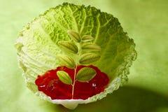 生长里面叶子的圆白菜 图库摄影