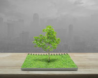 生长从在木桌上的一本开放书的树在污染ci 免版税库存照片