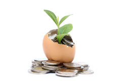 生长从在鸡蛋里面的硬币的金钱树。 免版税库存图片