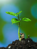 生长从地面的新芽 免版税库存图片