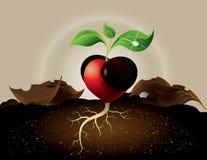 生长从心脏的绿色新芽的概念 免版税库存照片