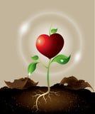 生长从心脏的绿色新芽的概念 免版税库存图片
