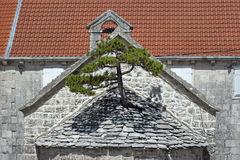 生长从教会屋顶的杉树  库存图片